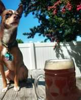 🍺New Beer Release🍺